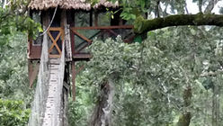 Luxury tree house hotel opens