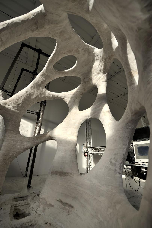 Radiolaria by Andrea Morgante