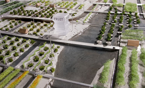 Rent a plot and grow in Germany