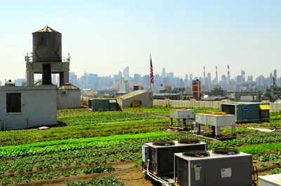 Brooklyn Grange Farm, New York