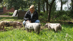 Dutch pig farming stands out from the crowd