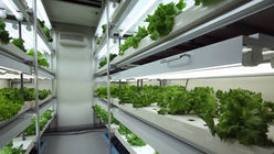Urban agriculture takes root with Agri-Cube