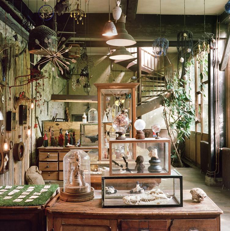 LSN : News : Museum of things: Cabinet of curiosities in Paris