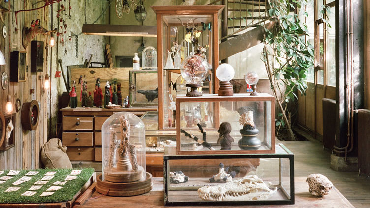 Lsn news museum of things cabinet of curiosities in paris for Meuble authentica