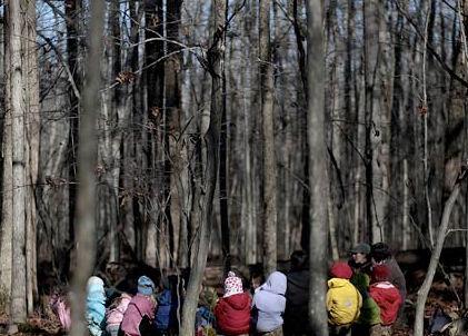 Forest kindergartens take off around the world