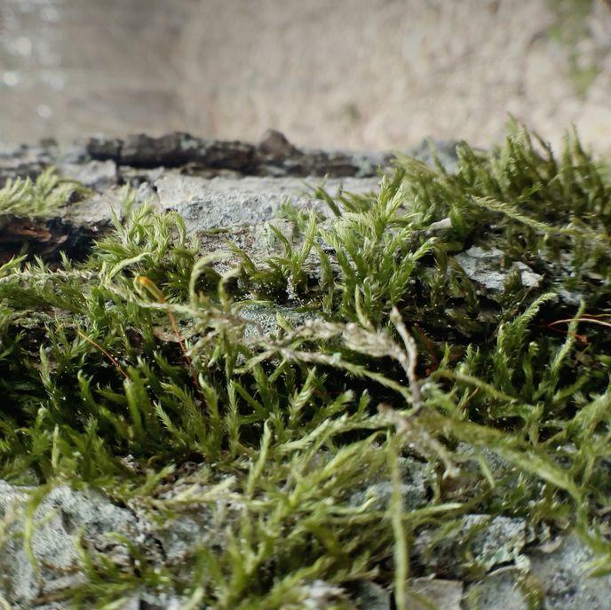 Seaweed by Jacek Pobłocki