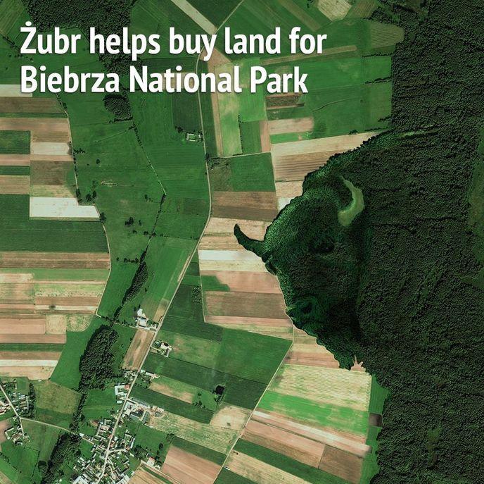 Żubr, Poland