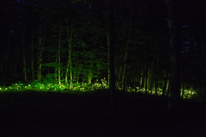 Forest Lumina by Moment Factory, Quebec