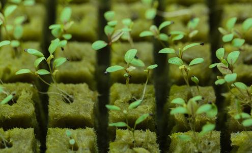 Biodiversity will unlock a bright future for food