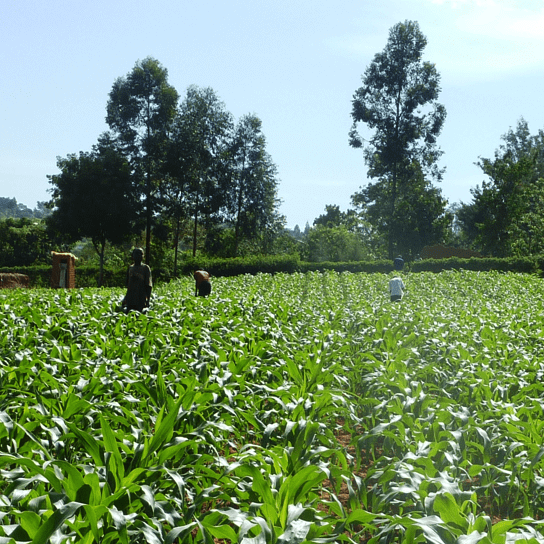 Apollo Agriculture, Kenya