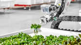 Thought-starter: Will rooftop farms feed the masses?