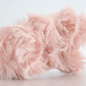Thought-starter: Will fashion embrace eco-friendly fur?