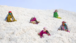 Future-proofing India's organic cotton farmers
