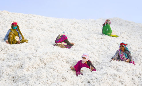 Future-proofing India's organic cotton farmers