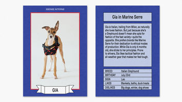 Luxury label doppelgangers for four-legged friends