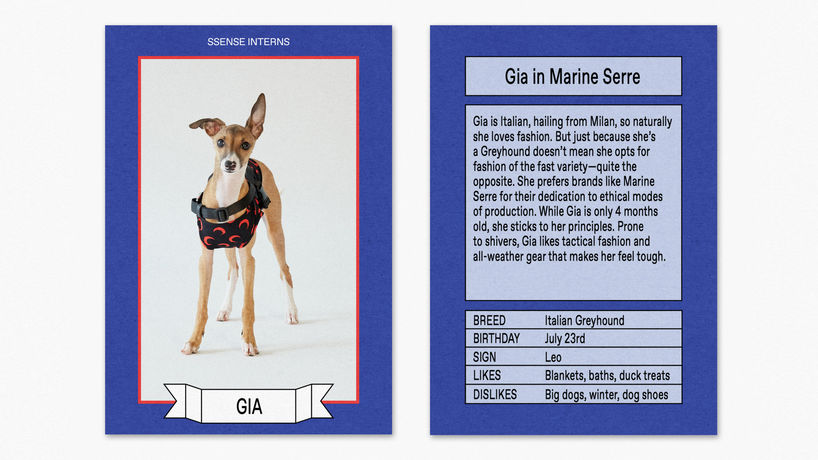 SSENSE dogwear