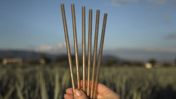 Jose Cuervo launches agave-based bio straws